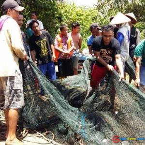 Nelayan Kaur