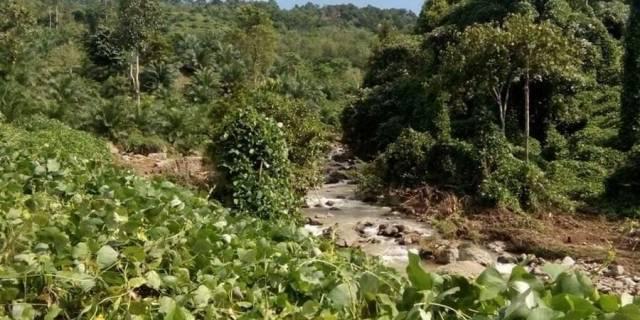 Diduga PT.RAA Di Bengkulu Tengah Ancam Tanaman Perkebunan Warga